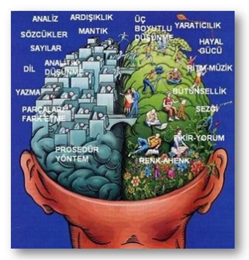 beyin sağ sol
